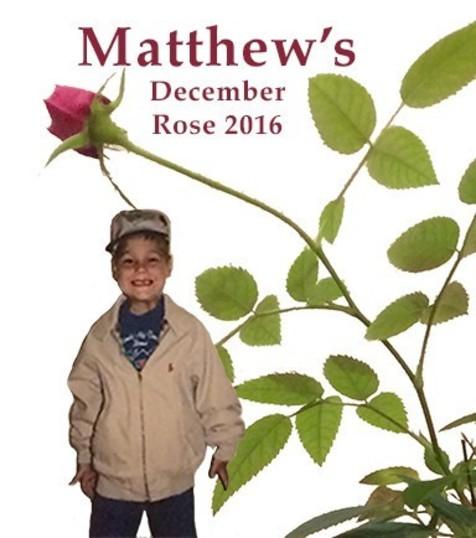 2016 Rose Sm